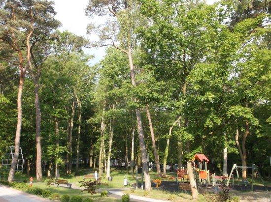 Park Przyjaciół Pustkowa