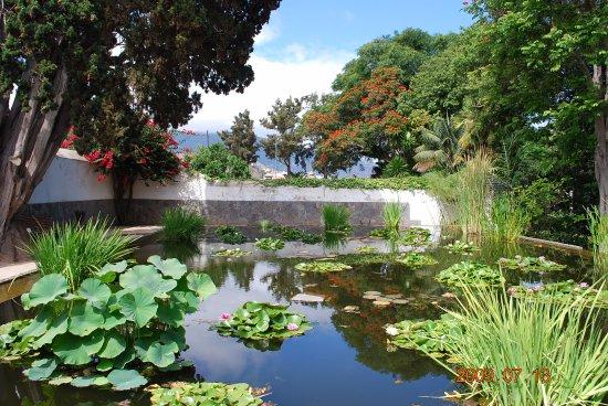 Estanque Con Nenufares Picture Of Botanical Gardens Jardin - Jardin-con-estanque