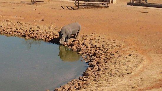 Middleburg, Sydafrika: 20150802_133809_large.jpg