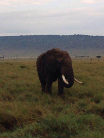 Mara Serena Safari Lodge: photo0.jpg