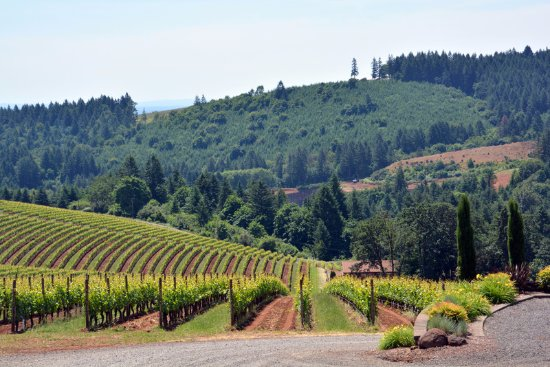 A Nose For Wine Tours : Scenes from an incredible two day tour.