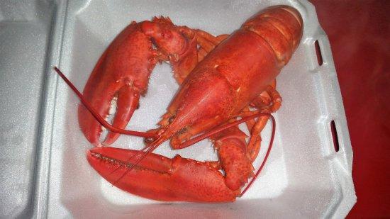 Windham, ME: Lobster- :D