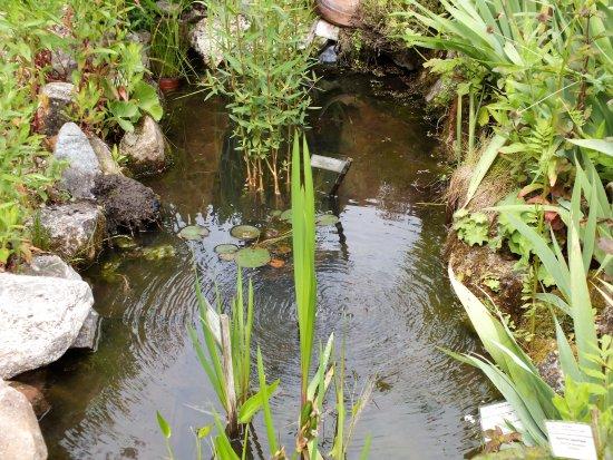 L'Herbarium : le petit plan d'eau