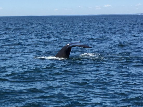 Capt Bill & Sons Whale Watch: photo0.jpg