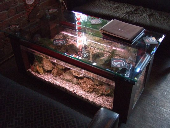 Coffee Table Fish Tank Picture of Spice Lounge Liverpool