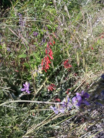 Palomar Mountain, CA: Wildflowers