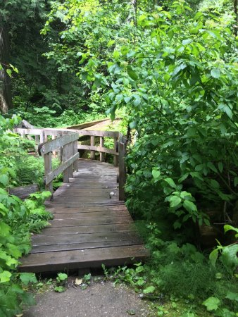 Giant Cedars Boardwalk Trail: photo3.jpg