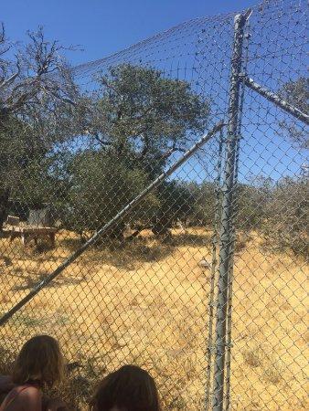 California Wolf Center: photo2.jpg