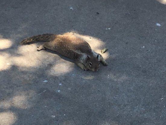 California Wolf Center: photo3.jpg