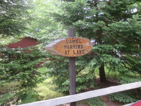 Wetmore, MI: Camel parking at lake