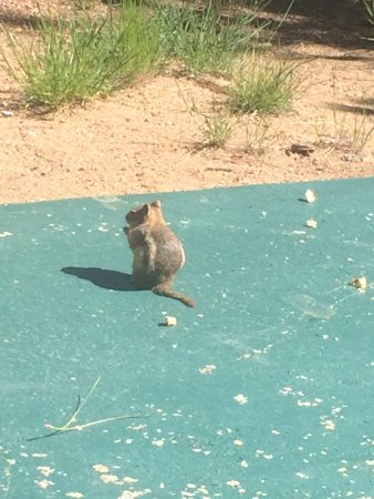 Machin's Cottages in the Pines: Buddy the chipmunk