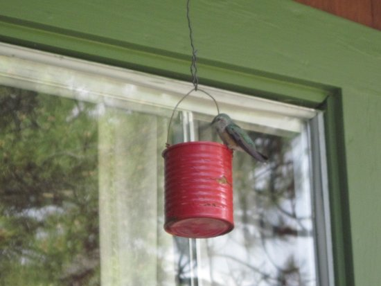 Machin's Cottages in the Pines: This one of many hummingbirds that visited us.