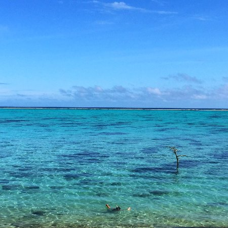 Painapo Beach Moorea : bay to snorkel in