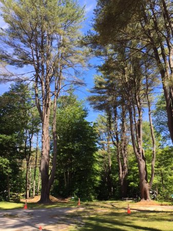 Center Harbor, NH: Shady Campground Area