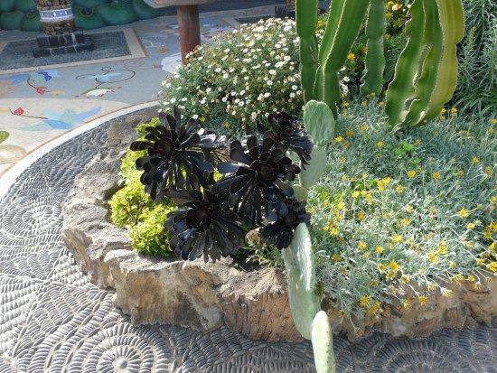 Las Manchas, Espanha: PIANTE GRASSE