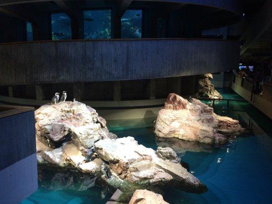 Top of giant fish tank picture of new england aquarium New england aquarium tickets
