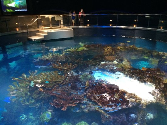 Top Of Giant Fish Tank Picture Of New England Aquarium Boston Tripadvisor