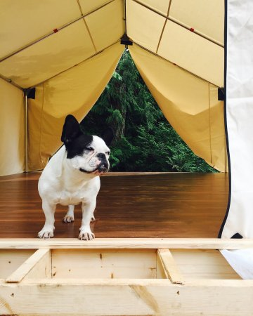 Hornby Island, Kanada: Spa Dog - During the construction process