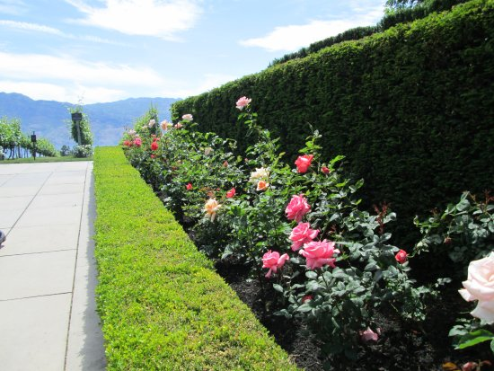 West Kelowna, Kanada: The grounds are perfectly manicured