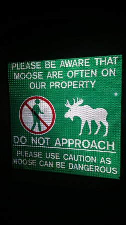 Fairbanks Princess Riverside Lodge: Didn't see any here!