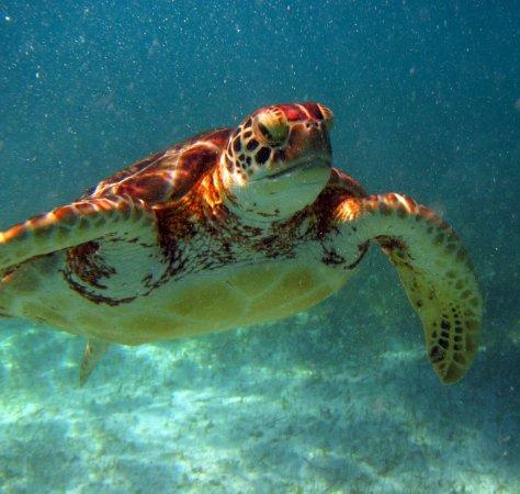 Under Da Sea Adventures