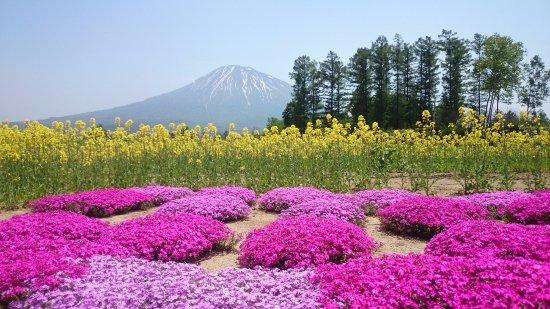 倶知安町, 北海道, 三島さんの芝ざくら庭園