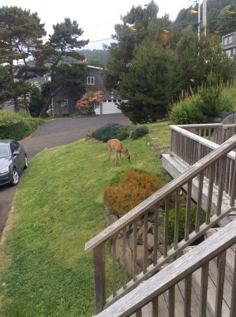 Lincoln City, OR: The deers that stopped by everyday.