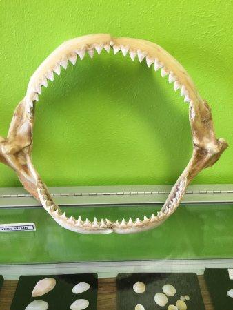 University of Texas - Pan American Coastal Studies Lab: photo2.jpg