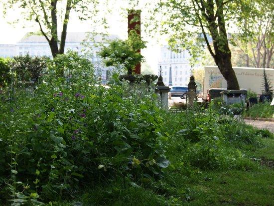 Garden Museum: Wild garden and Lambeth Bridge