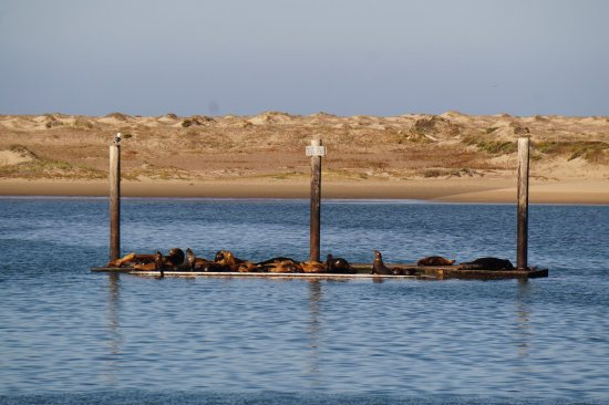 Anderson Inn: View of the sea lions right by the Inn