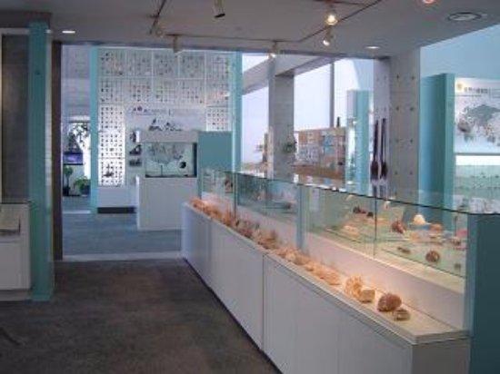 Nishinomiya Shell Museum: 西宮市貝類館の写真
