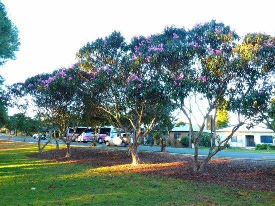 Lasiandra Park Wauchope NSW (June 2016)