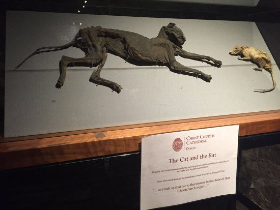 Christ Church Cathedral: The cat and the rat!