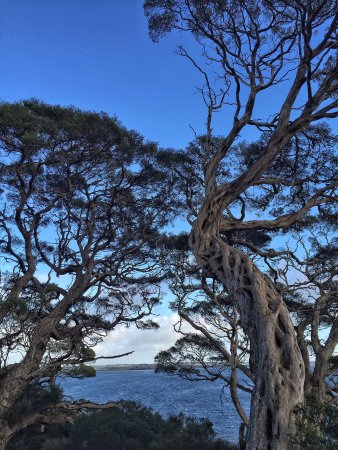Cowes, Australia: Walking with us - daily