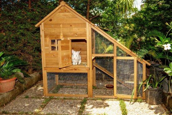 Villa Concetta: Garden - rabbit house