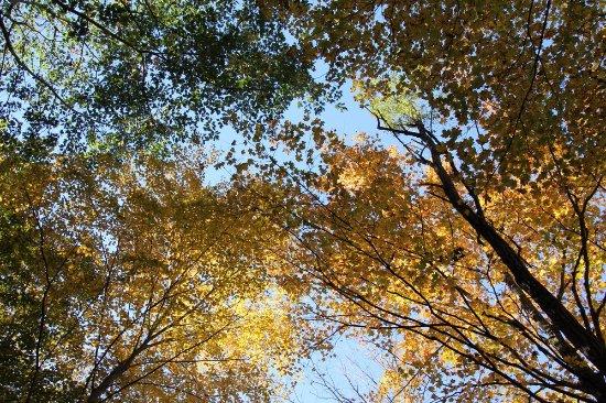 Trumansburg, estado de Nueva York: Colorful leaves!