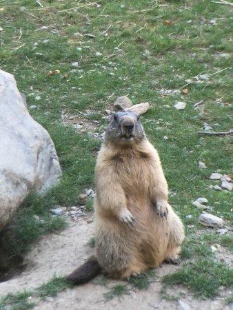 Murmures d'Arbres : Oh, une marmotte ! :)