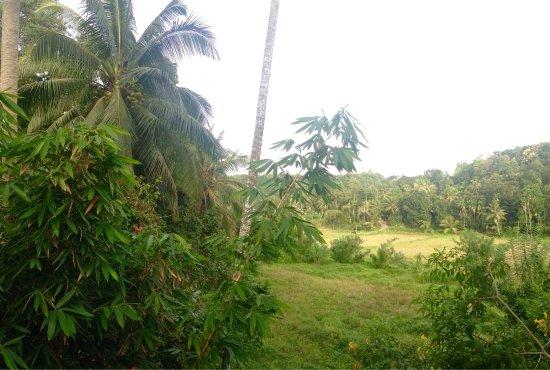 Mawanella, Sri Lanka: photo1.jpg