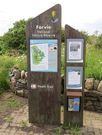 ‪Forvie National Nature Reserve‬