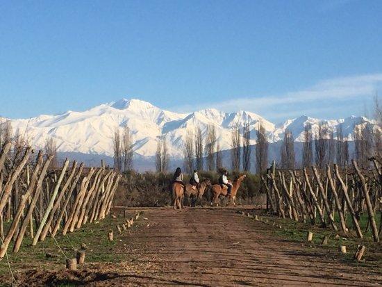 Cavas Wine Lodge: Lugar único!! Increíble!! Para ir a descansar, disfrutar de la naturaleza. Él lodge es 10 puntos