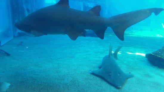 Happy Hippo Accommodation: aquarium