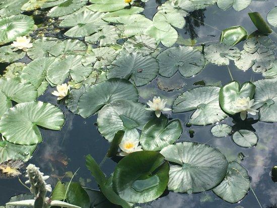 Giardino Pietra Corva : Giardino botanico alpino di pietra corva foto di giardino
