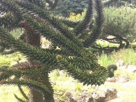 Giardino Pietra Corva : Giardino botanico alpino di pietra corva foto di giardino botanico