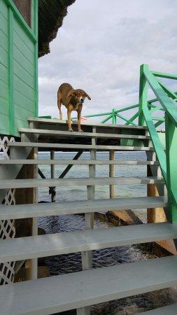 Turneffe Island, Belice: Blackbird Caye Resort