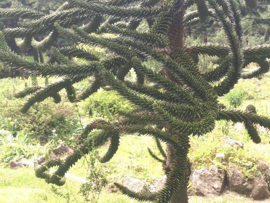 Giardino Pietra Corva : Photo1.jpg picture of giardino botanico alpino di pietra corva