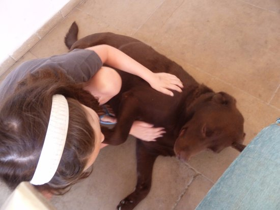 Riad Laaroussa Hotel and Spa: My daughter playing with Ben, the lazy chocolate lab