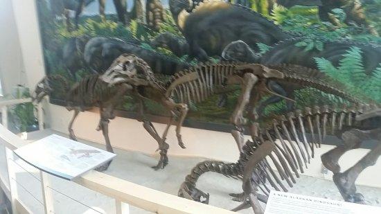University of Alaska Museum of the North: 20160621_161826_large.jpg