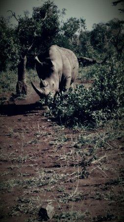 Zululand, Sudáfrica: 2016-06-18 19_large.jpg