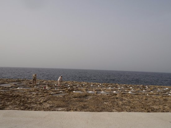 Zebbug, Malta: raccoglitori