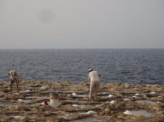 Zebbug, Malta: raccoglitori da vicino